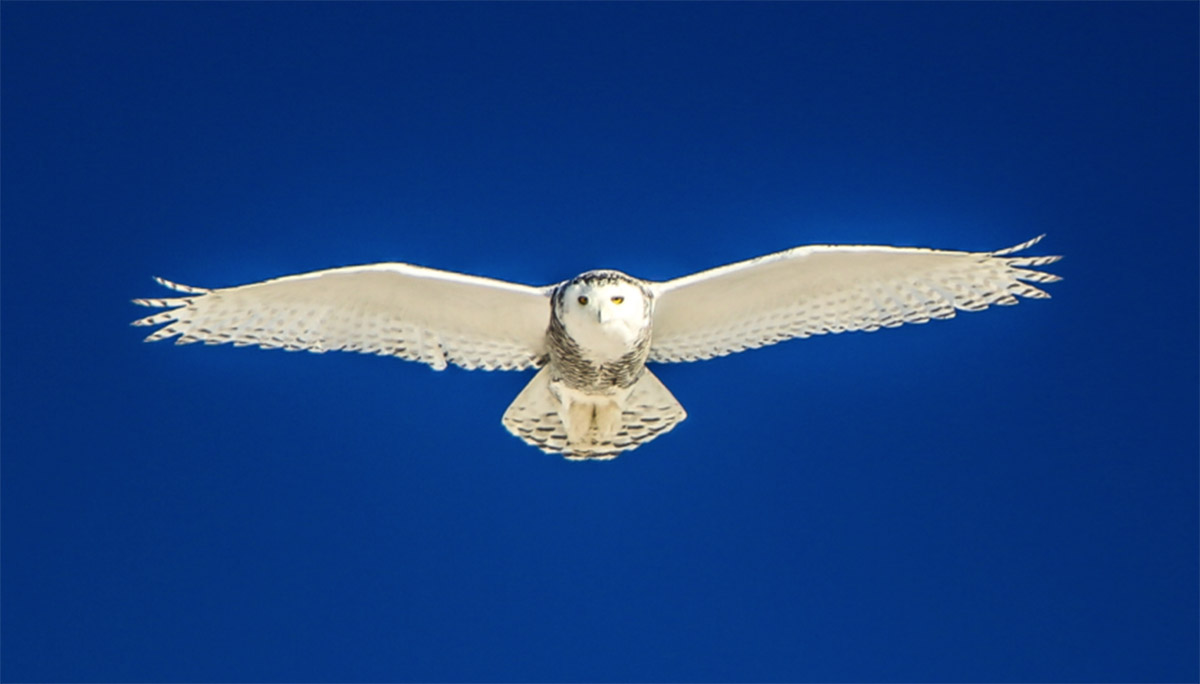 Owl-Award